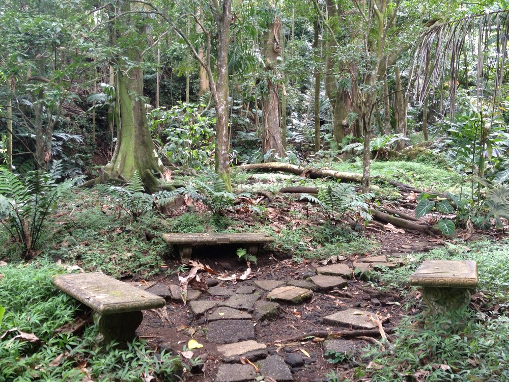 A walkway in a forest with a bench and some Native Hawaiian plants.