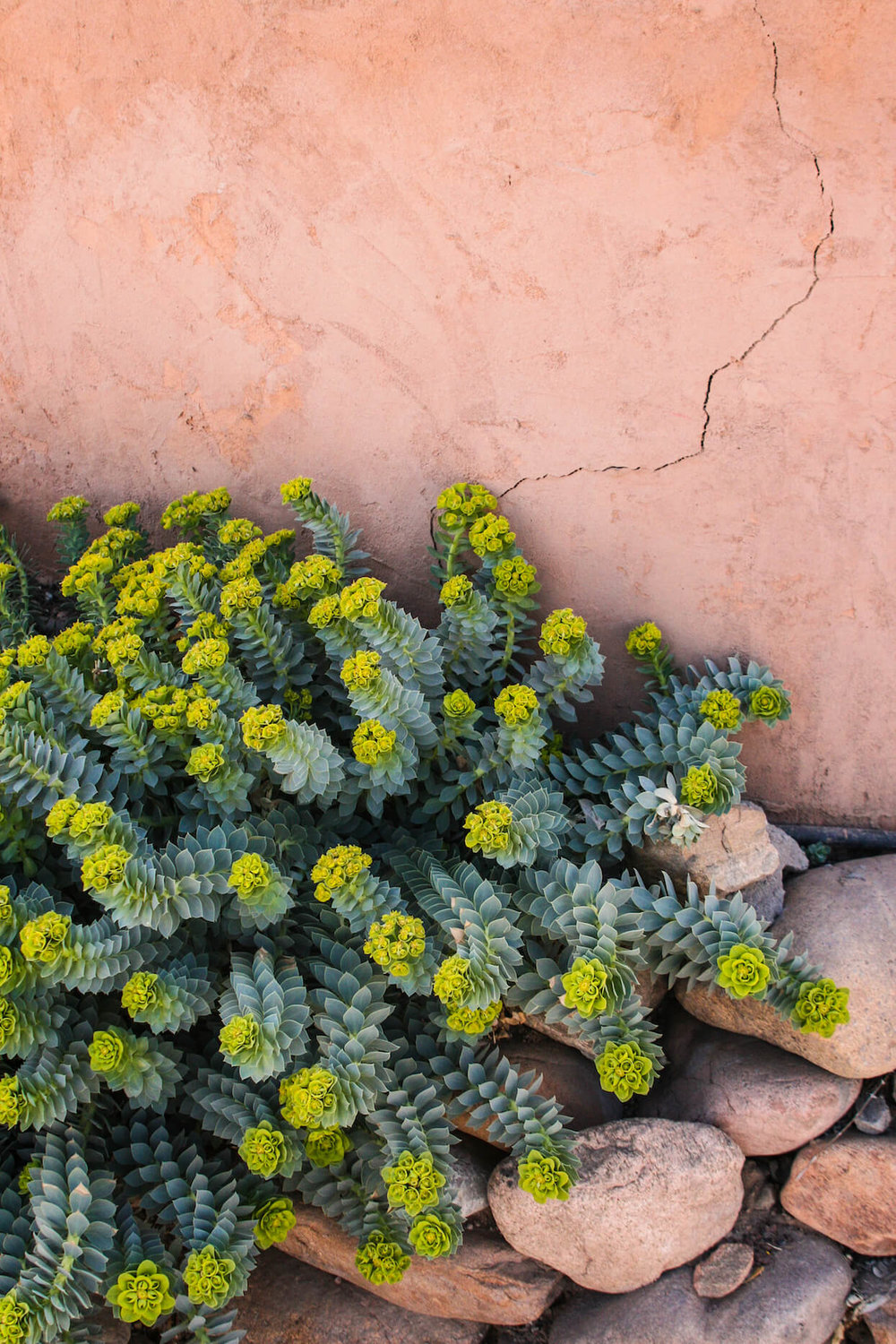 Euphorbia and Adobe