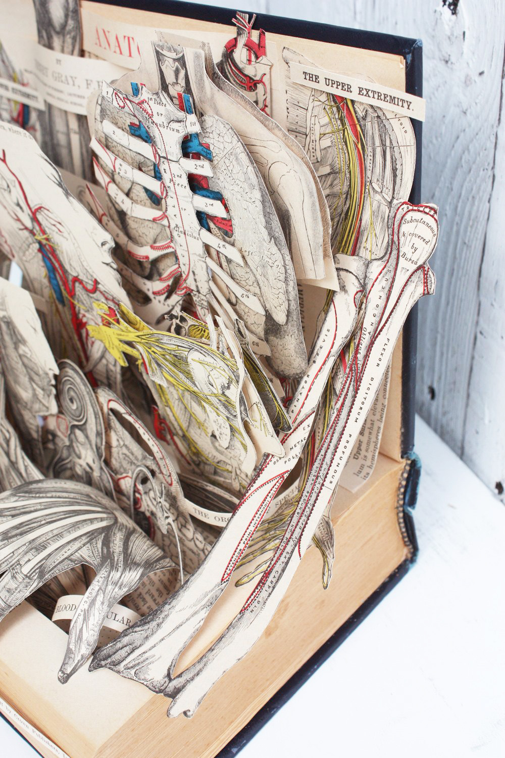 grays-anatomy-book-sculpture-02x.jpg