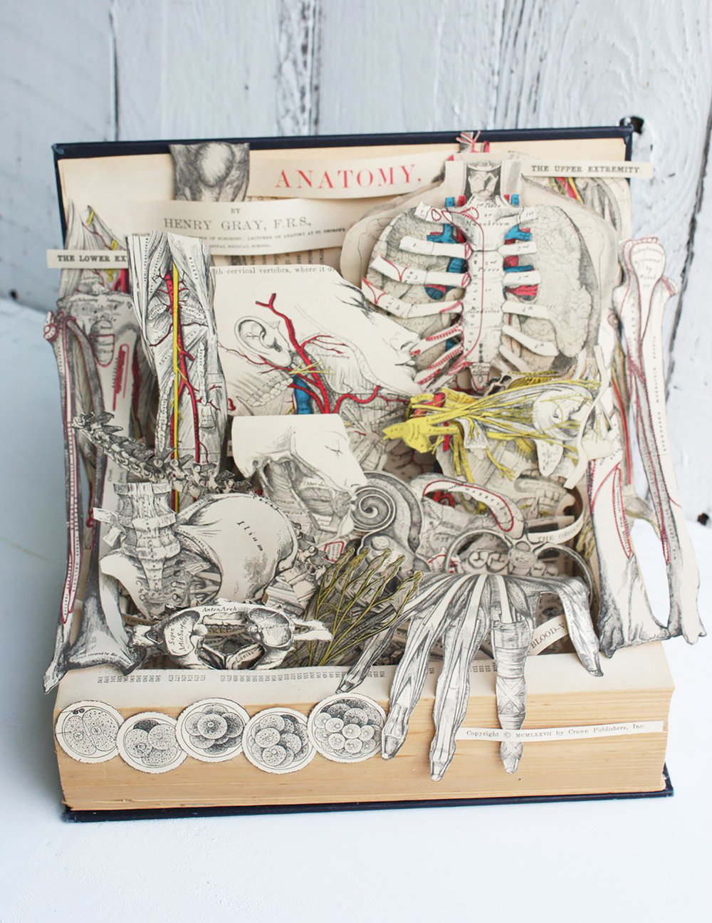 grays-anatomy-book-sculpture-04y.jpg
