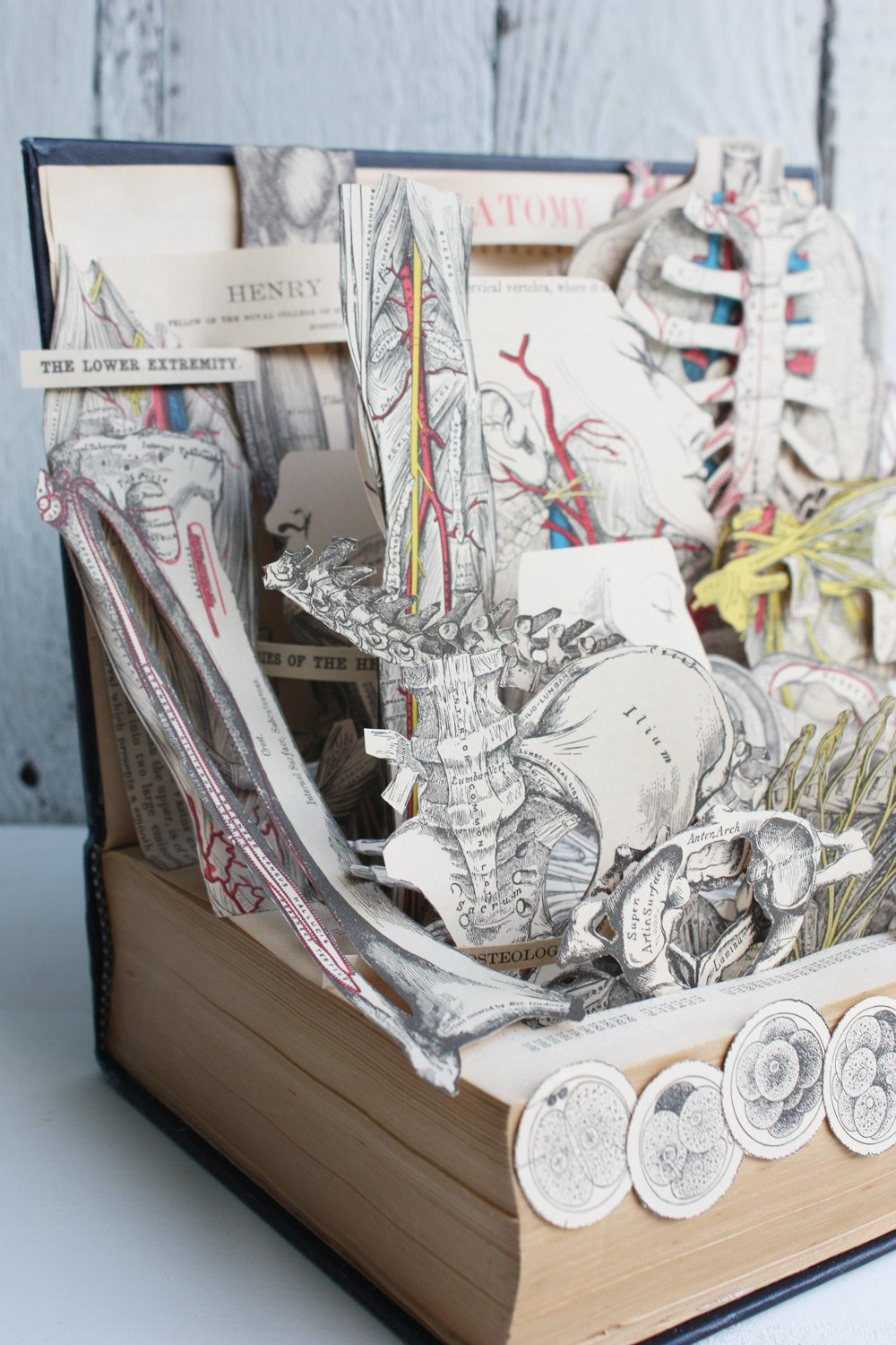 grays-anatomy-book-sculpture-01.jpg