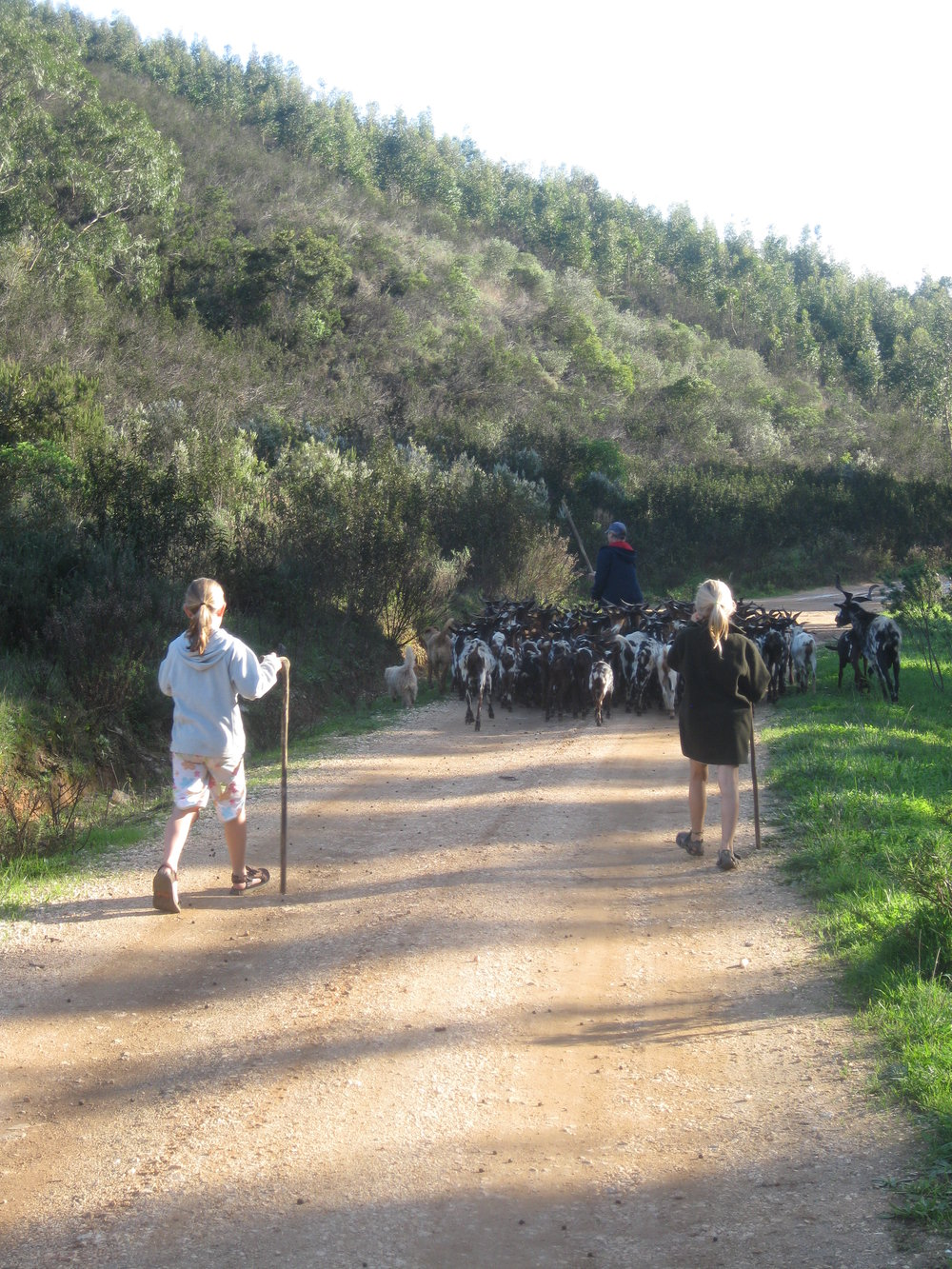 Madeleine & Johanna walking a herd of goats down the road to browse, Portugal, 2010.
