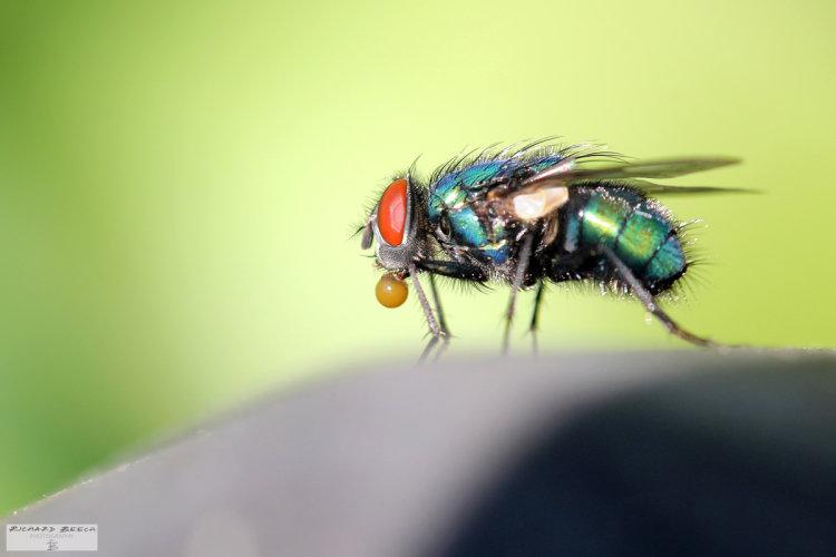 bubblefly1200.jpg