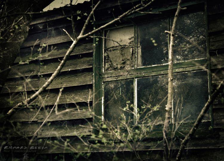 zombieeyeviewoct1511200.jpg