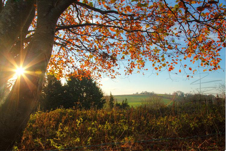 autumnstarflickr750.jpg