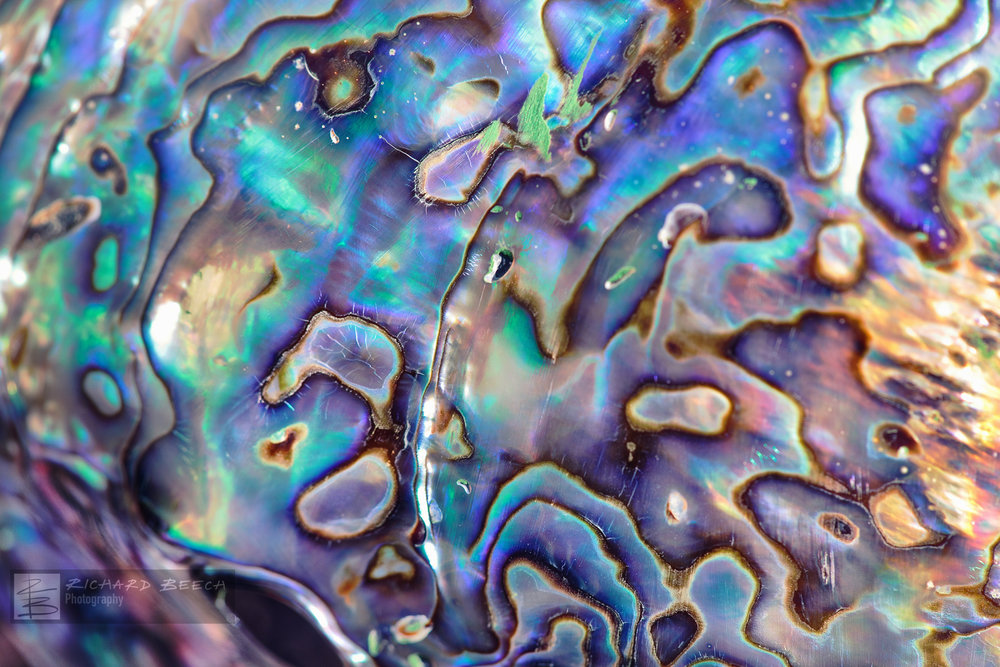 Abalone - Mother of Pearl