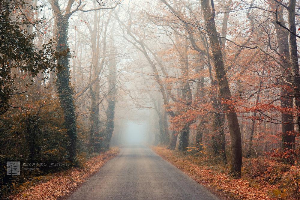 Misty Moreton Road