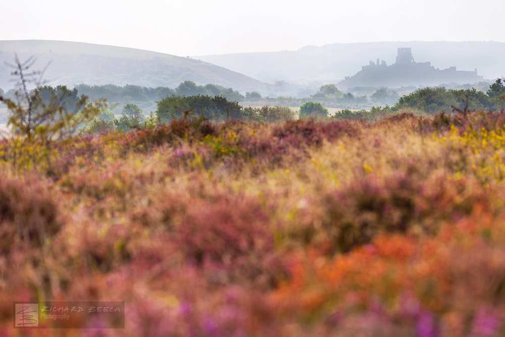 The Colours of Corfe