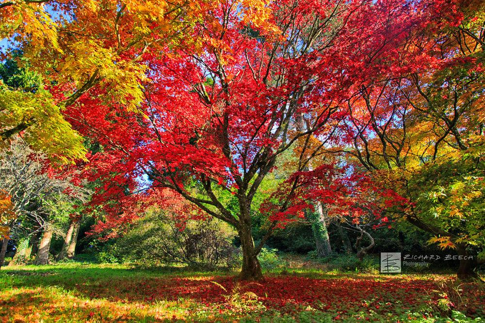 Autumn Scene at Minterne