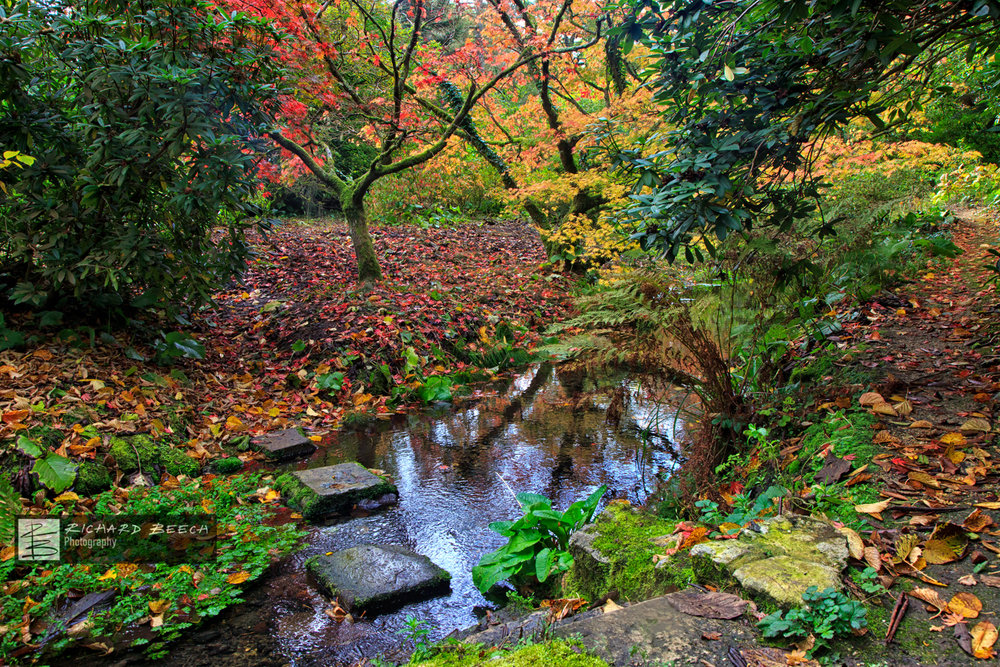 Minterne Autumn Stepping Stones