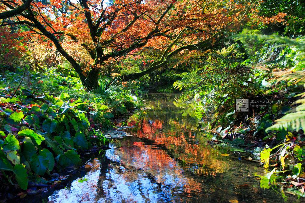 Autumnal Symmetry Minterne