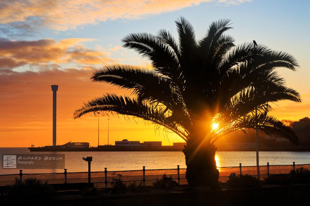 Weymouth Sunrise Palm Tree