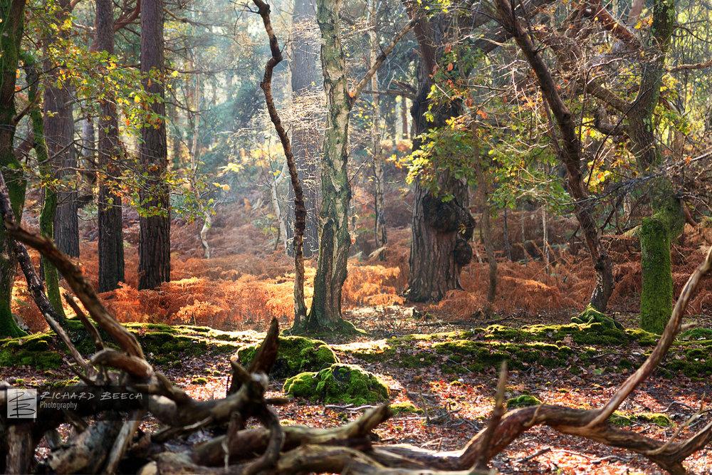 An Autumn Day at Arne