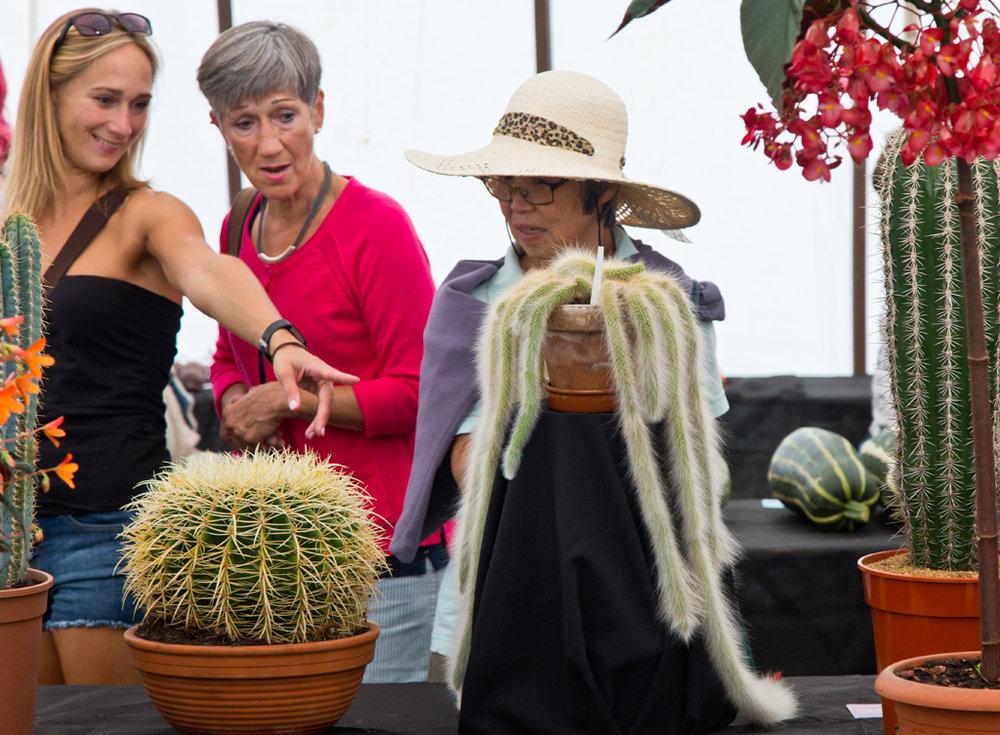 Cactus Surprise!
