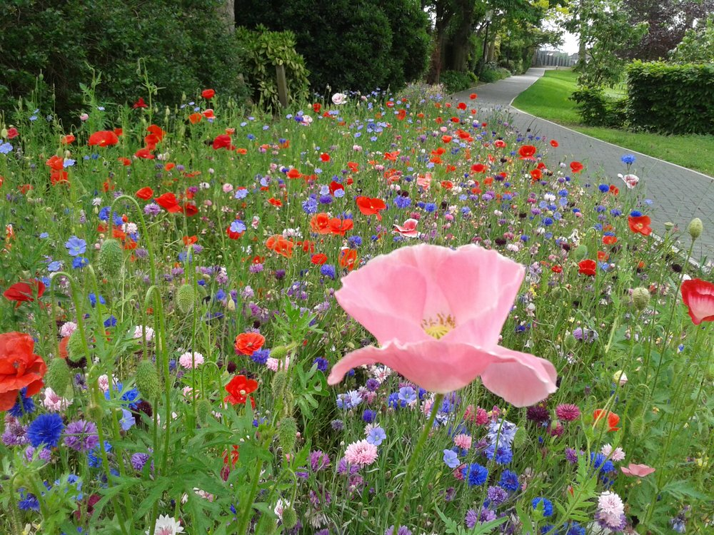 Meadow_blog.jpg