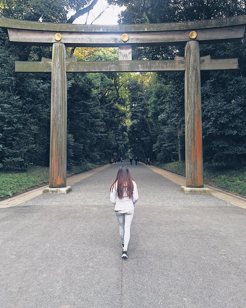 Meiji Shrine: A Forest Retreat in the Middle of Tokyo -