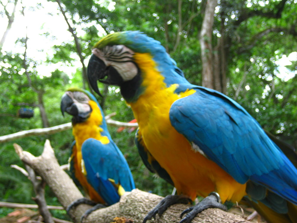 Macaw Mountain