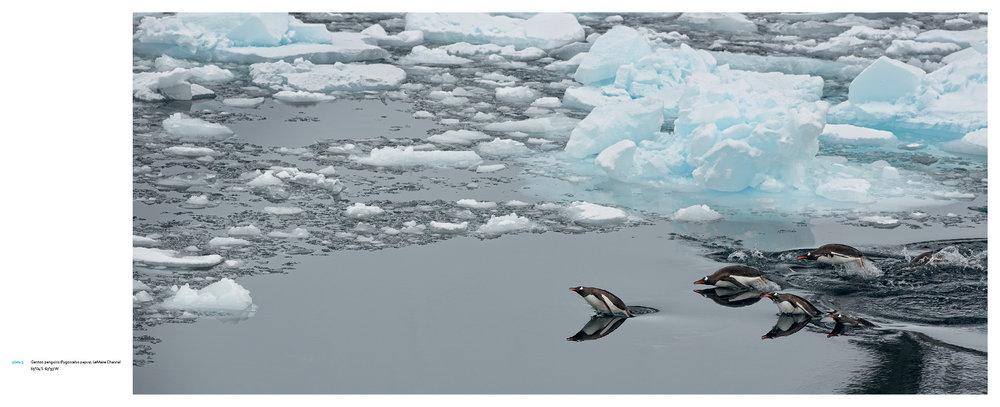 Antarctica_v13_5.jpg