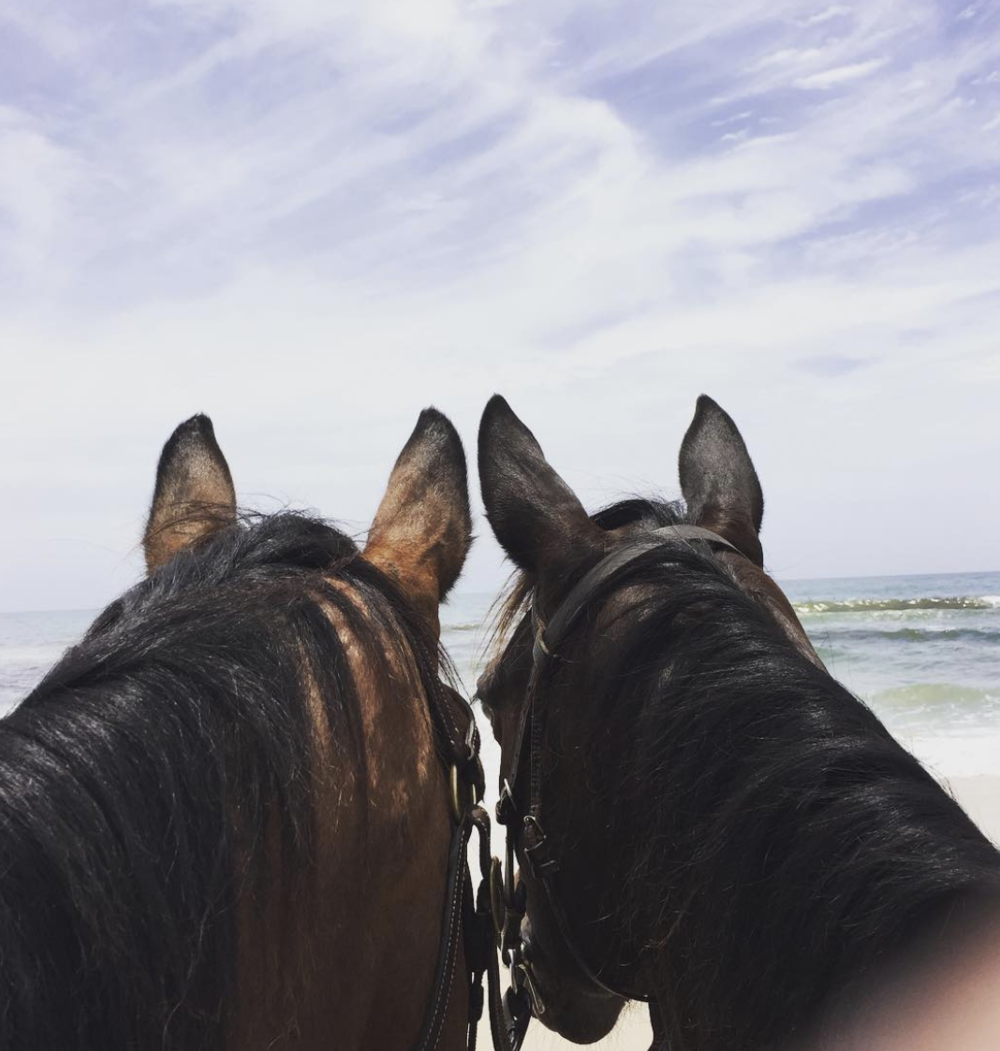 Horse Riding on the beach - Chose from sunrise or sunset rides, no experience necessary.Go with Zephyr Horses https://www.zephyrhorses.com