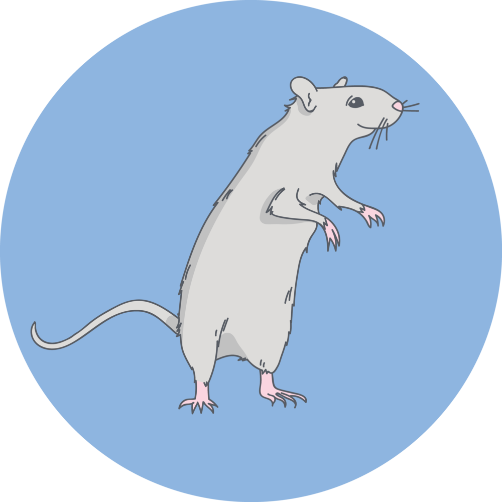 rat solo.png