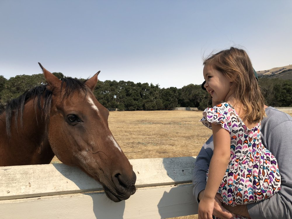 Typical Day in Carmel Valley -