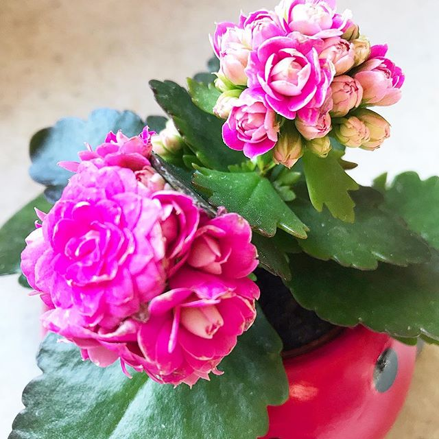 🌺 #flowerphotograph #naturephotograph #brightcolor #hotpinkflowers #homedecorinspiration