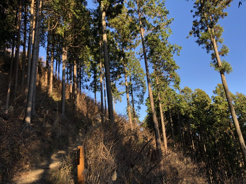 More woods and more trees near Kobotoke Shiroyama peak