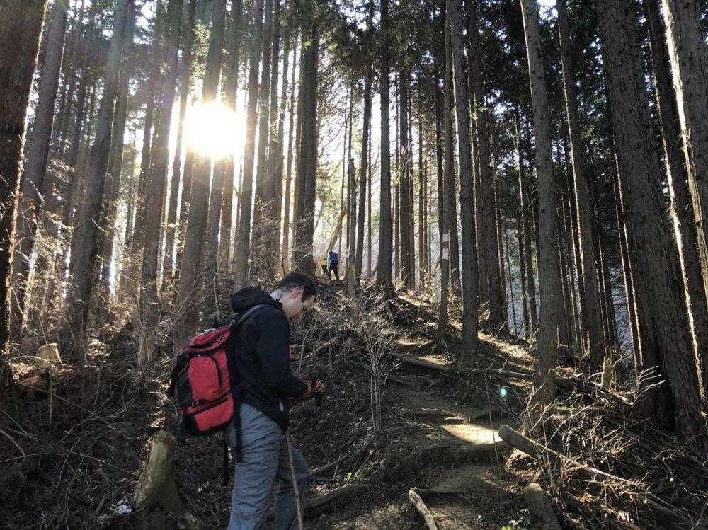 Ascending Mount Jinba in the woods