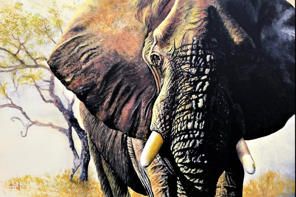 The Ivory Bull.JPG
