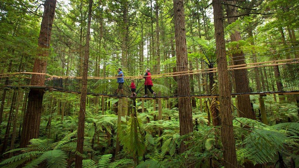 Credit Redwoods Treewalk_Pete_0055cp.jpg