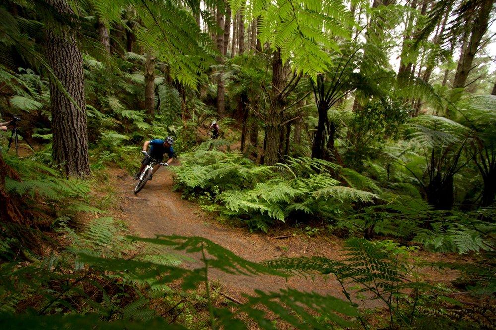 Mountain Biking - Whakarewarewa Forest
