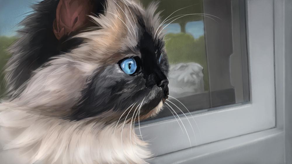 Portrait of a customer's cat.