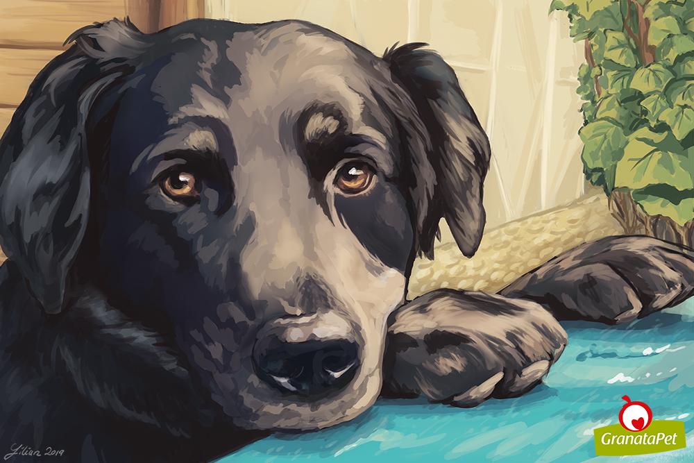 Portrait of a customer's dog.