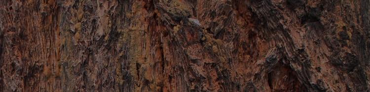 bark2.jpg