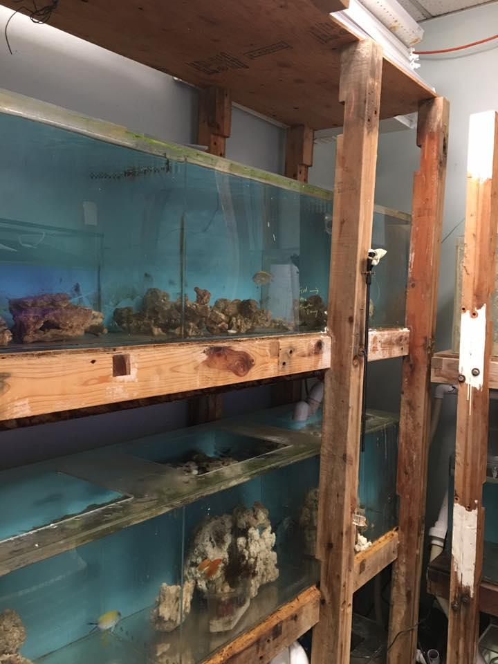 Saltwater city's quarantine may not be pretty (whose is?) but it plays a vital role in enabling us to offer you the healthiest possible fish for your home.