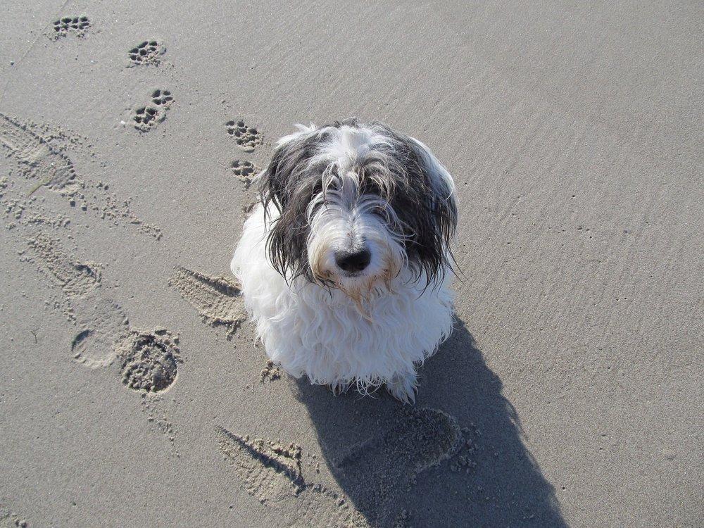 dog-403699_1920.jpg