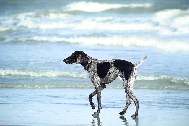beach-2545973_640.jpg