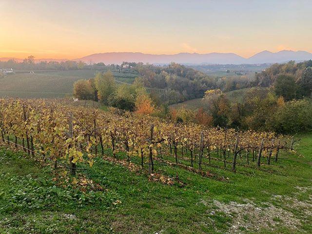 Today's sunset in Collalbrigo, shot by @fedecosulich . . . #wine #prosecco #proseccolife #proseccolove #proseccotime #streetphotography #winery #veneto #italy #landscape #hill #proseccodocg