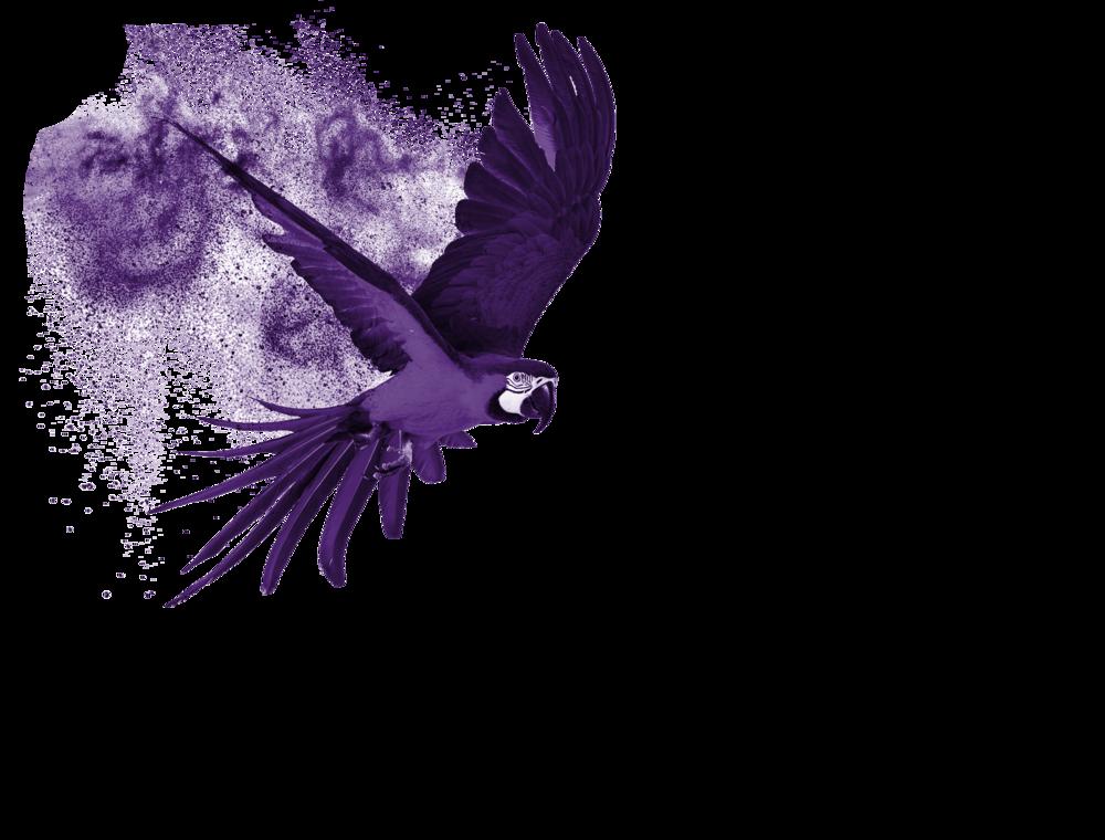 perroquet SP PUB violet solo_rogne.png