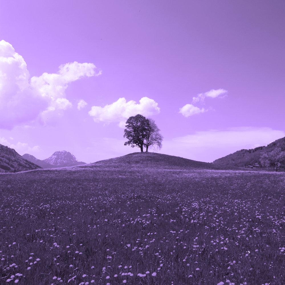 arbre-violet-bulle.jpg