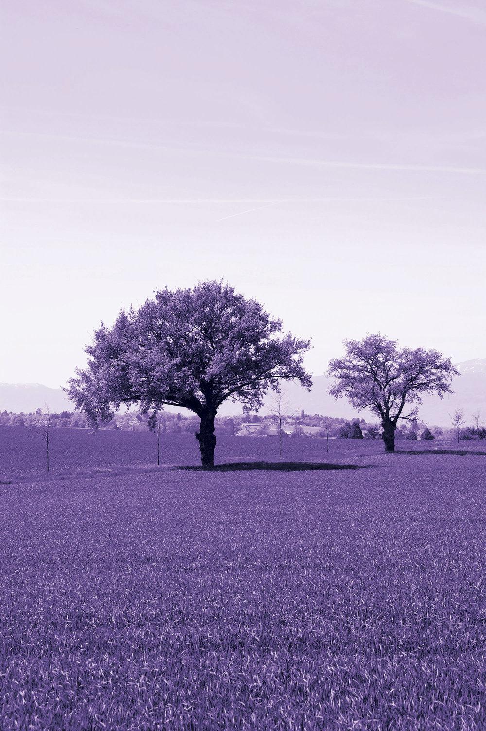 Arbre fond violet .jpg