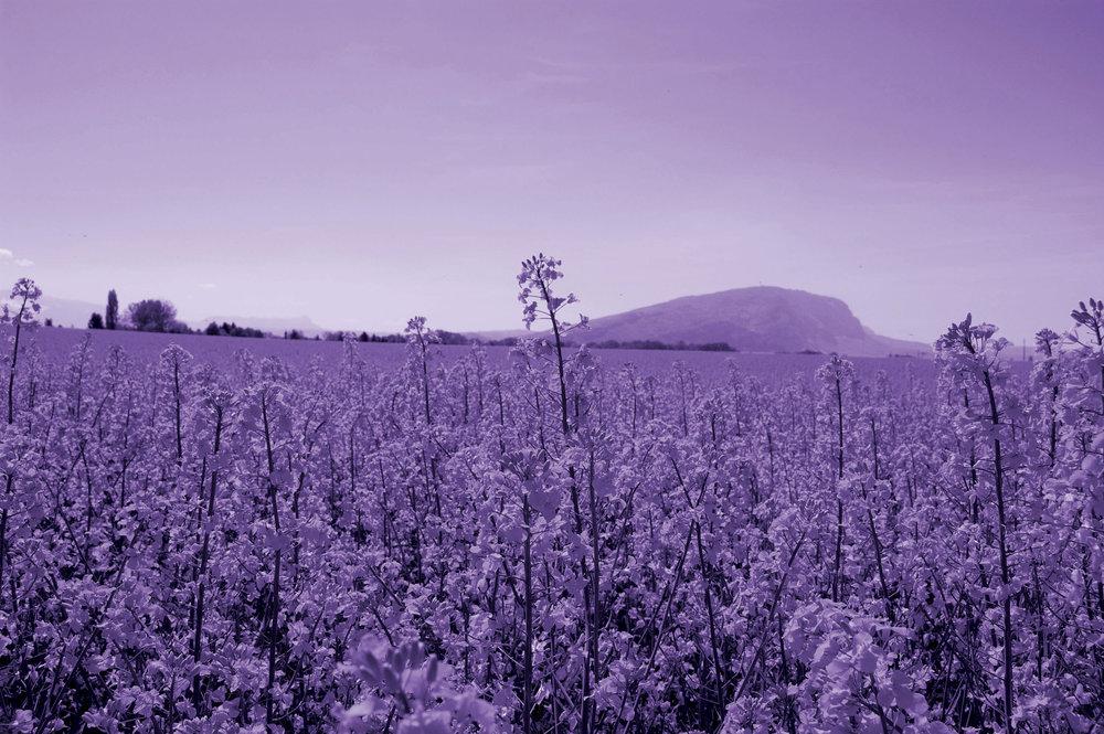 Fond-image-violet.jpg