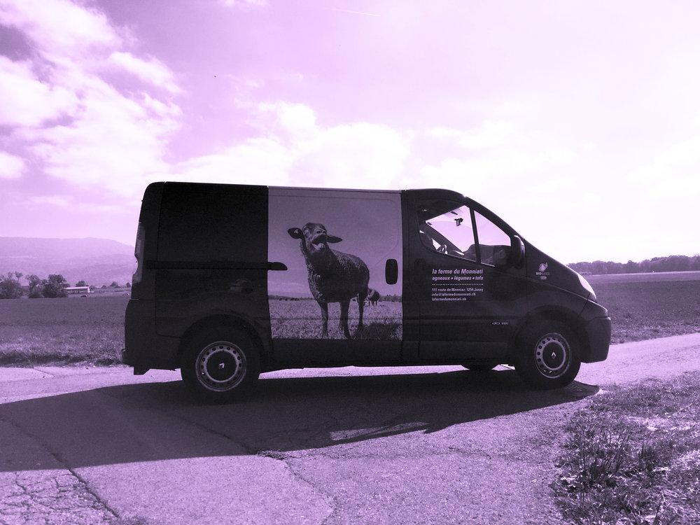 mouton-vehicule.jpg