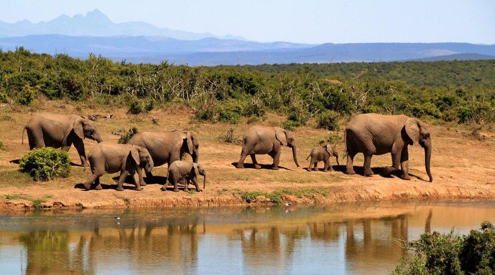 Elephants - Destination Done