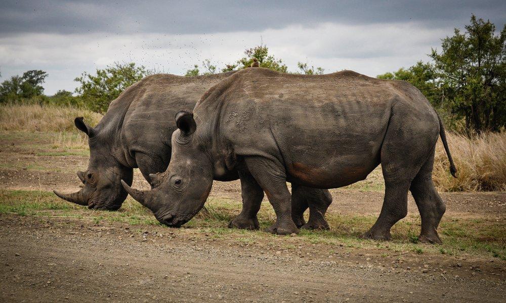 africa-animals-big-631292.jpg