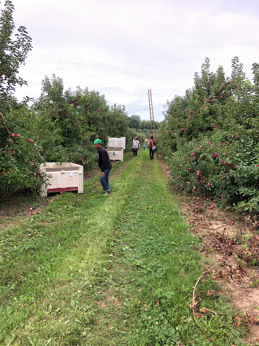 Harvest Season here at Abendroth's Apple Ridge Orchard