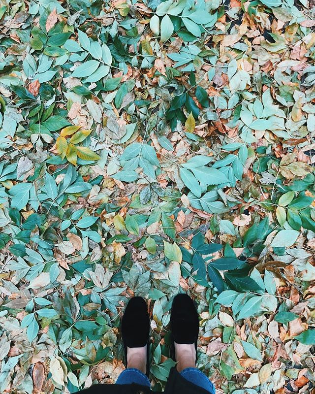 Pro tip for Fall. Look down. It's pretty. Like seriously pretty. #ThisIsCavalry #CavalryAgency . . . #igersofchicago #insta_chicago #Fall