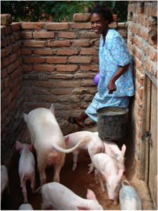 A young woman is carrying a bucket of grains to feed the pigs at her feet.