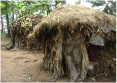 A Traditional Thatch Roof Home