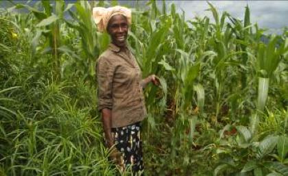 Mary Chipofya of Kamangadazi village in her maize garden fertilized with manure.